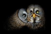 'Lovebirds' von Bettina Dittmann