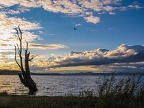 'Der morsche Baum auf der Insel Reichenau - Bodensee' von Christine Horn