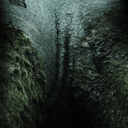 Darkness-0302-fertilitatis
