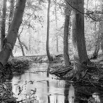 mystischer Wald by Nils Volkmer