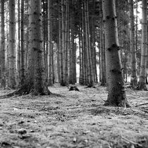 und ewig singen die Wälder von Nils Volkmer