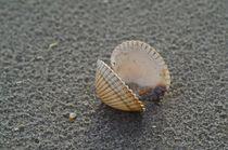 'Muschel am Strand' von atelier-kristen