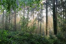 Waldlandschaft von Bernhard Kaiser
