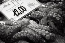 Octopus by Annik Susemihl