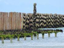 Le moules de Bretagne von minnewater