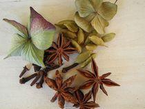 Stillleben mit Gewürzen und trockenen Blüten von Renate Grobelny
