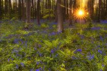 magischer Wald by moqui
