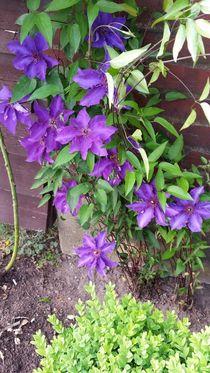 Blumentraum in lila  by Iris Bernecker