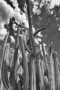 Tall Cactus von Elisabeth  Lucas
