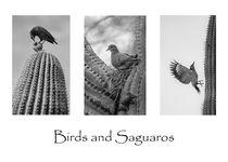 Birds and Saguaros 2 von Elisabeth  Lucas