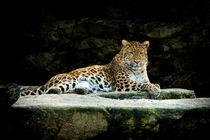 Leopard Zyklus I by Ingo Mai