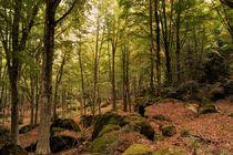 Tief im Wald by Frank  Kimpfel