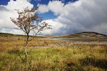 Lonely tree/Einsamer Baum im Burren by Thomas Lotze