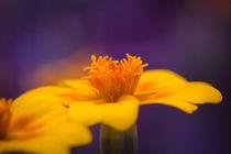 Blume von Simone Rein
