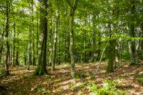 Herbstwald von Simone Rein