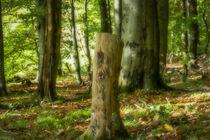 Herbstwald by Simone Rein