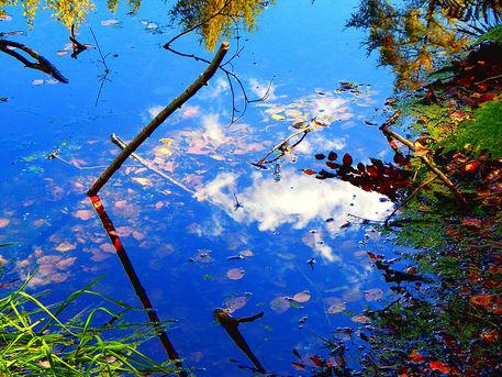 Wasser-wald-wolken