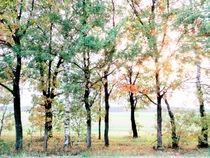 Autumn trees by Andrei Grigorev