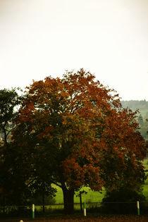 Herbstbaum  by Bastian  Kienitz