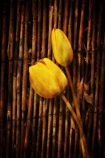 Gelbe Tulpen von Claudia Evans