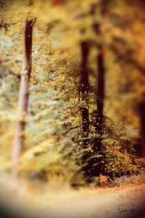 Herbstwinde  by Sandra  Vollmann