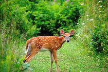 Little Deer, 2017