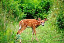 Little Deer 3, 2017