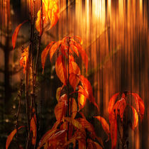 Herbstfeuer - autumn fire by Chris Berger