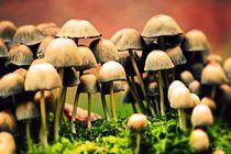 Herrliche Pilzfamilie von Sandra  Vollmann
