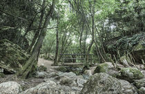 Wooden Bridge, Riera de Martinet, Aiguafreda (Catalonia) von Marc Garrido Clotet