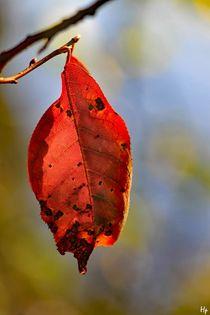 Autumn von Heidi Piirto