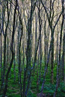 Glendalough... 5 von loewenherz-artwork