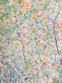 Color fever by Andrei Grigorev