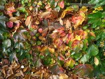 Herbstblätter in allen Herbstfarben von assy