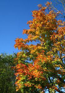 goldener Oktober mit blauem Himmel ! by assy