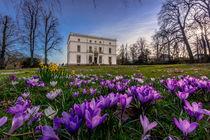 Krokussblüte am Jenischhaus von photobiahamburg