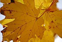 Herbst... 5 von loewenherz-artwork