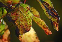 Herbst... 1 by loewenherz-artwork