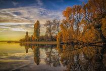 Halbinsel Mettnau in herbstlichen Farben - Bodensee von Christine Horn