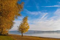 Sonniger Herbsttag auf der Halbinsel Mettnau bei Radolfzell - Bodensee von Christine Horn