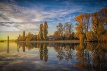 Nachmittags im Herbst auf der Halbinsel Mettnau - Bodensee von Christine Horn