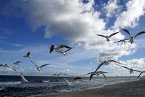 Seemöwenschar an der polnischen Ostsee by Juana Kreßner