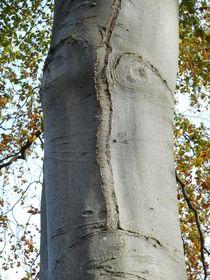 Bernd das Baum by Kristin König-Salbreiter