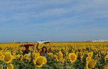 Ocean of SUNFLOWERS by Manou Rabe