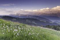 Berner Oberland in der goldenen Stunde  by Raphael Schaefer