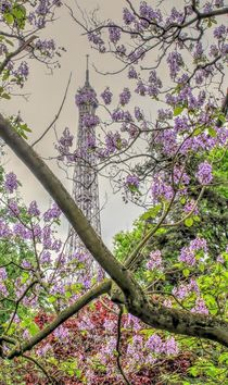 Tour Eiffel with lilacs by Maria Preibsch