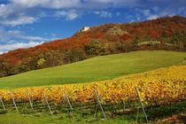 Goldener Herbst bei Jena/Golden Autumn near Jena von Thomas Lotze