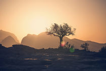 Single tree of Oman