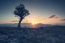 ancient tree of Oman