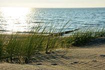 Strandhafer an der Nordseeküste von Claudia Evans